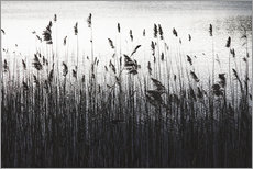Gallery print  At The Lake - Mareike Böhmer Photography