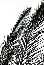 Gallery print  Palm Leaves - Mareike Böhmer