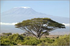 Gallery print  Big tree in front of the Kilimanjaro - Joe & Mary Ann McDonald