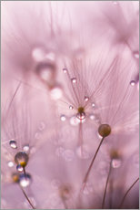 Wall sticker Dewdrops on a dandelion seed