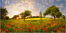 Gallery print  Poppy meadow at sunset - Michael Rucker