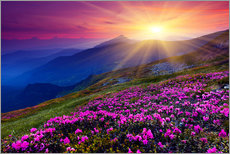 Gallery Print  Rhododendron in the Carpathians