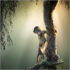 Wall sticker  Baby baboon in tree - Johan Swanepoel