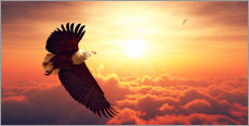 Gallery print  Fish Eagles flying above clouds - Johan Swanepoel