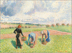 Gallery print  Paysannes ramassant of the herb - Camille Pissarro