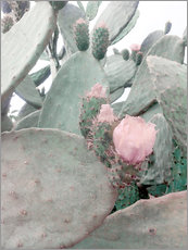 Wall sticker  pink cactus flower - Emanuela Carratoni