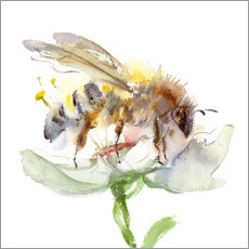 Wall sticker  Honey bee - Verbrugge Watercolor
