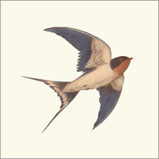 Wall sticker Barn swallow