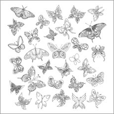 Colouring poster  Butterflies