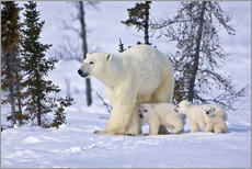 Wall sticker  Polar bear with three cubs in the tundra