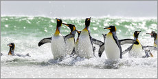 Wall Stickers  King penguin bathing - Cubo Images