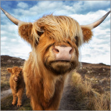 Westend61 - Highland cattle with calf