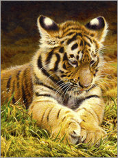 Wall sticker Young tiger lying in grass