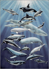 Wall Stickers  Marine mammals - ACE