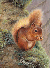 Gallery print  Squirrel with nut - Ikon Images
