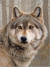 Wall sticker  North American Wolf - Ikon Images