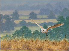 Wall sticker Barn owl in watercolor and colored pencil