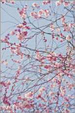 Wall sticker  Flowering branch - Johner