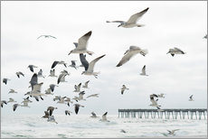 Wall Stickers  Swarm of seagulls - Image Source