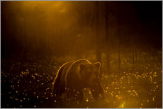 Gallery Print  Brown bear in the forest - Cultura/Seb Oliver
