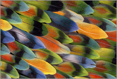 Wall sticker  colourful parrot feathers - Darrell Gulin