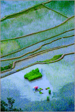 Wall sticker  Rice terraces of Banaue - Michael Runkel