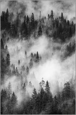 Wall sticker  Black and white pine forests - Judith Zimmerman