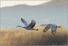 Wall sticker  Canada cranes in flight - Maresa Pryor