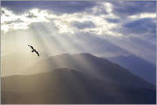 Wall Sticker  Seagull and God rays over the Olympic Mountains - Don Paulson