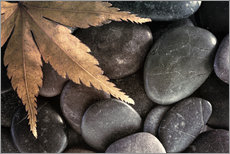 Gallery print  Maple leaf on pebbles - Don Paulson