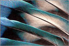 Wall sticker  Agaporniden tail feathers - Darrell Gulin