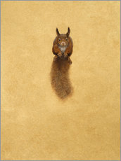 Wall sticker  Leaping Red Squirrel - - Tim Hayward