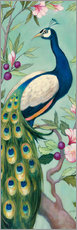 Gallery print  Pretty Peacock II - Julia Purinton