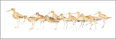 Wall Stickers  Watercolor Sandpipers Panel - Avery Tillmon