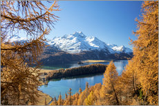 Gallery Print  Colorful forests around Lake Sils, Switzerland - Roberto Moiola