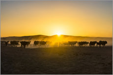 Gallery print  Backlight of cattle on the way home at sunset - Michael Runkel