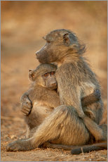 Wall sticker  Baboon consoles a baby - James Hager