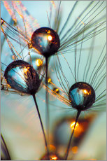 Wall sticker  Dandelion umbrella with large dew drops - Julia Delgado