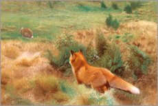 Gallery print  Fox Stalking Hare - Bruno Andreas Liljefors