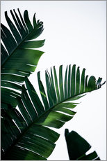 Wall sticker  Palm Leaves 16 - Mareike Böhmer
