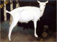 Gallery print  Young white goat - Jan Mankes