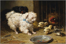Wall sticker  A Bichon Frise and a King Charles Spaniel - Henriette Ronner-Knip