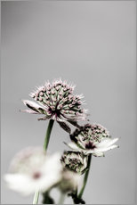 Wall Stickers  Delicate leek blossoms - Mareike Böhmer Photography