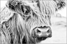 Wall sticker  Highland cattle - Art Couture