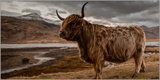 Wall Stickers  Highland cattle in the highlands - Art Couture