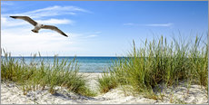 Gallery print  Seagull flight over sand dunes, Baltic Sea - Art Couture