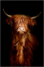 Canvas  Scottish highland cattle - Art Couture