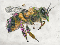 Foam board print  honeybee - Barrett Biggers