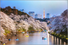 Premium poster River and cherry tree blossom in Tokyo