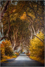 Gallery print  Dark hedges in Ireland - Sören Bartosch